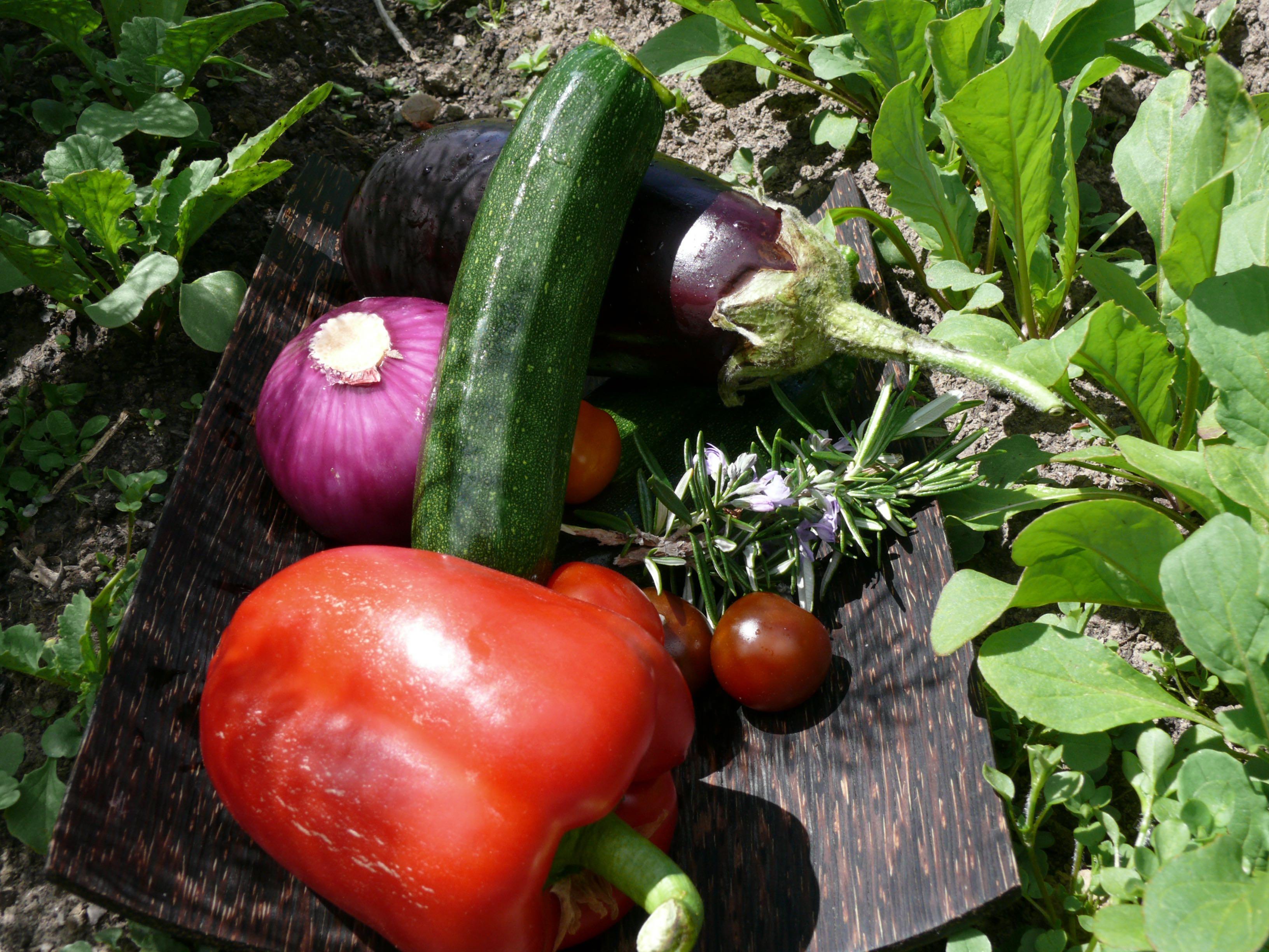 spring vegetable involtini