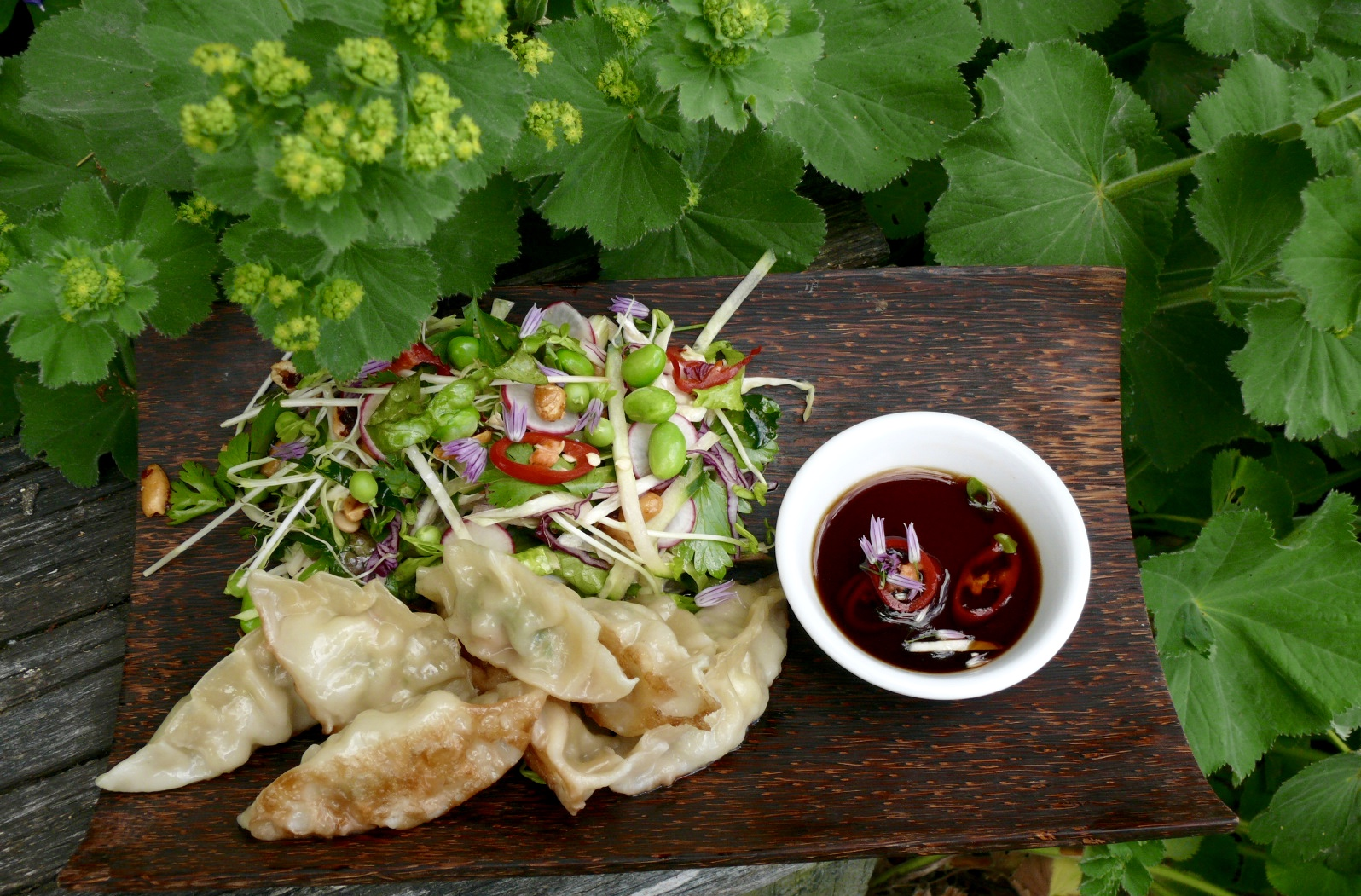 prawn potsticker dumplings and asian salad