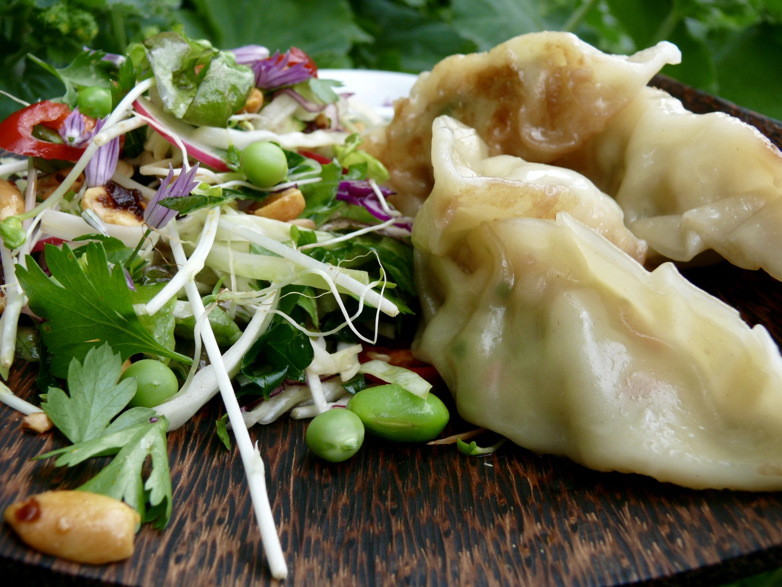 prawn potstickers and asian salad