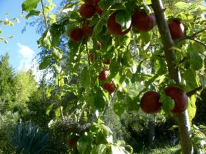 omega plums