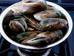 NZ green lip mussels